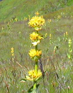 Flora Wild Flowers In France