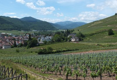 Alsace vineyards near Turckheim