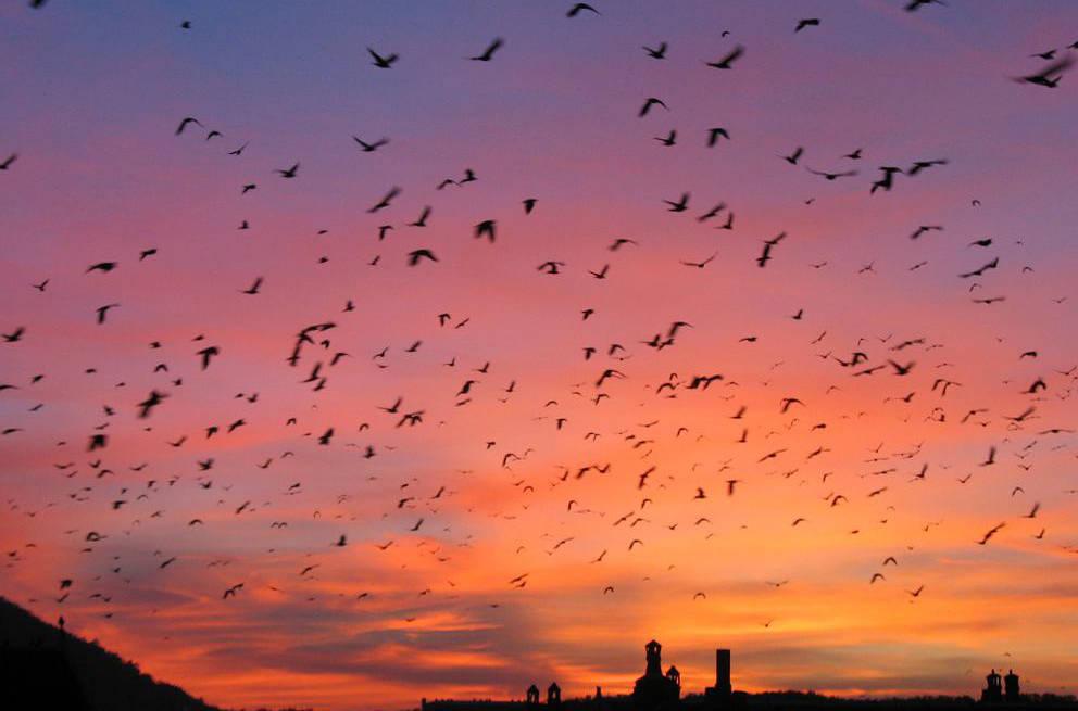 trip lee rise bird